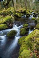 Arroyo salvaje en bosques viejos, movimiento de agua de lapso de tiempo