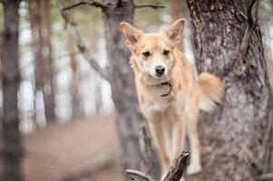 Portrait of a dog. photo