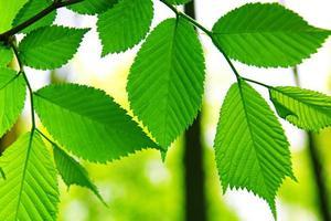 hojas verdes en un día soleado como telón de fondo.