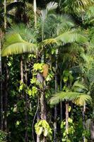 arco iris cae, gran isla, hawai foto