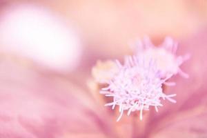 flor de hierba foto
