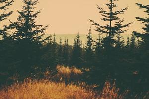 escena de bosque retro