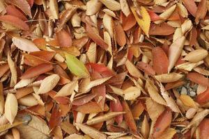 Fallen leaves photo