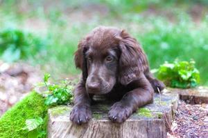 cachorro en el bosque foto