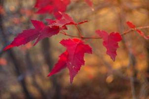cores vermelhas do outono