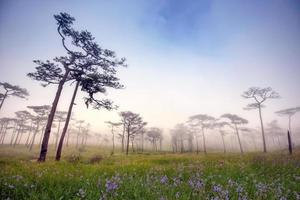 patio de pino de niebla de la mañana