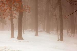 niebla por la mañana temprano en el bosque nevado