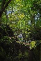 Japanese Waterfall photo
