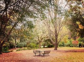 Lonely picnic table in beautiful garden