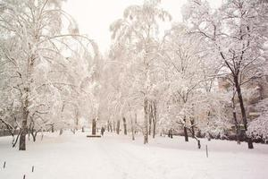 Snow covered tree photo