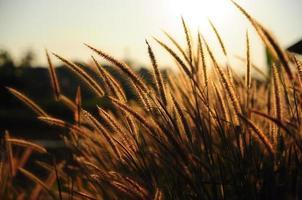 foto de época de flores hierba