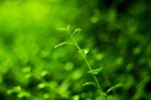 leaf colors photo