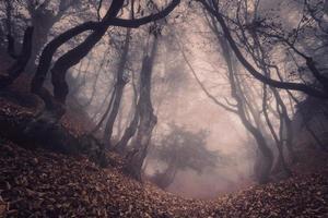 floresta de outono no nevoeiro. bela paisagem natural. estilo vintage