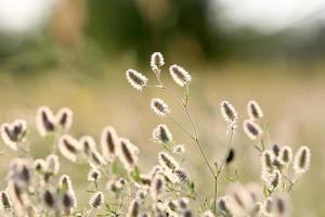 flowers on summer meadow
