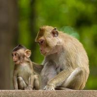 Mom and baby monkey photo