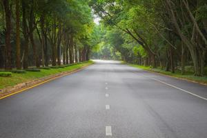 green tunel forest clean road in the early morning, Thailand
