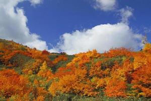 folhas coloridas em hachimantai