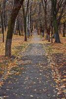 steegje bedekt met gevallen bladeren in de herfst.