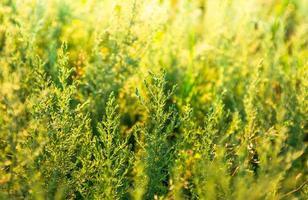 Beautiful green grass
