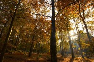 Autumn park, woods photo