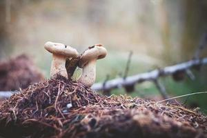 Mushrooms on the mossy ground Selective Focus