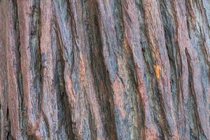 tree bark photo