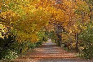 escena de otoño foto