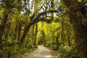 camino del bosque foto