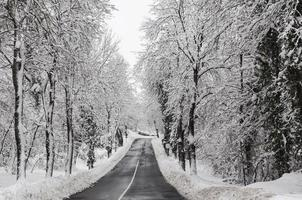 Rural road in winter. Trees covered by the snow