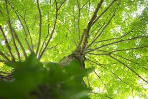 hojas verdes en la copa de los árboles - colores vibrantes