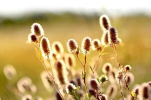 Summer flowers on meadow