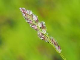 cereals in droplets