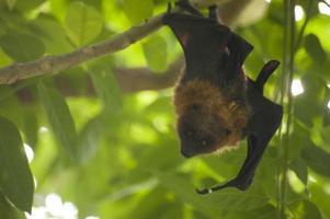 murciélago colgante en árbol verde