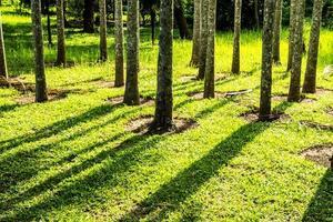 pilares de árboles foto