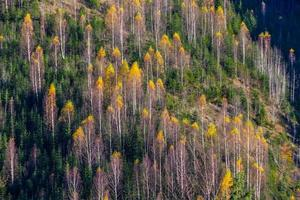 Beautiful autumn landscape in mountains Karpaty in the forest photo