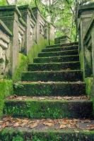 stone forrest stairs photo