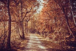 Forest road. Landscape.  avenue of trees in the park . photo