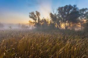 misterioso tiempo de la mañana en el área del pantano