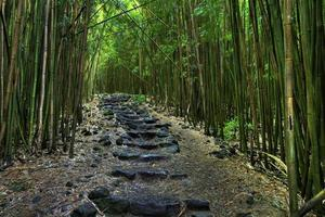 A black rock lined pathway through a dense forest