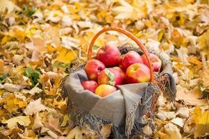 Cesta con manzanas en hojas de otoño en el bosque