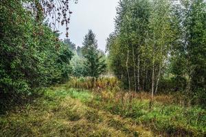 de rand van het bos in de mistige ochtend.