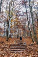 trekking path in the forest with a girl walking photo
