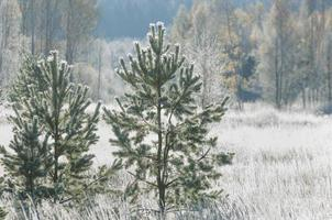 Frost on the trees and grass, fall in all colors
