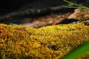 moss in daylight photo