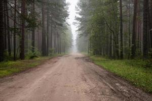 brumoso camino rural temprano en la mañana