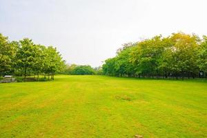 Trees in a park with green lawn