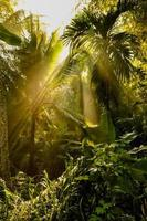 Sunlight goes through green leaves of tropic forest photo