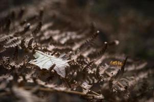 Foglia d'autunno photo