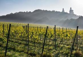 Silver Mountain vineyard em cracóvia, polônia