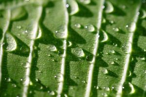 Water drops on leaf closeup
